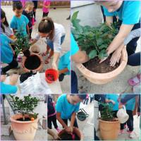 Svjetski dan sadnje stabla