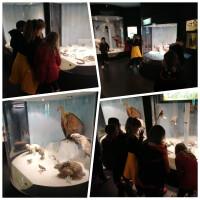 Posjet drugih razreda Prirodoslovnom muzeju